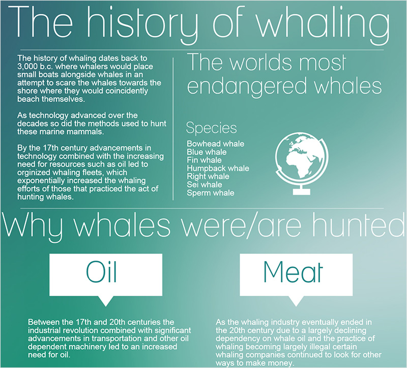 The-history-of-whaling