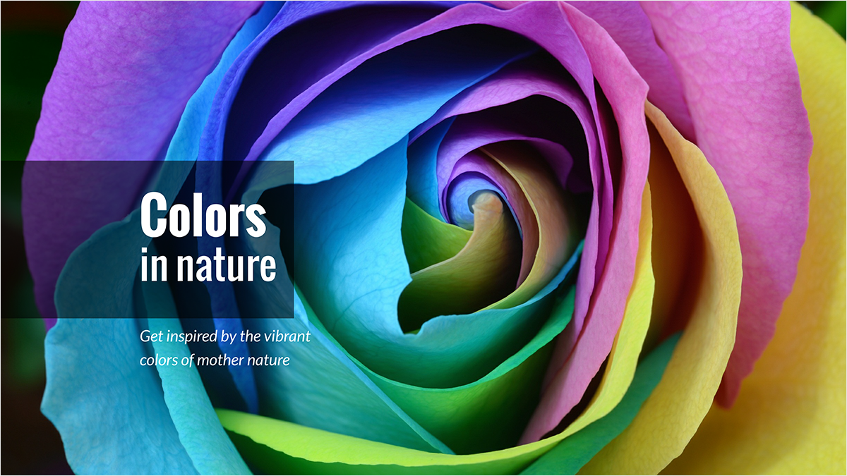 Rose-youtube-banner-template-channel-art-colors-nature-photography-photos