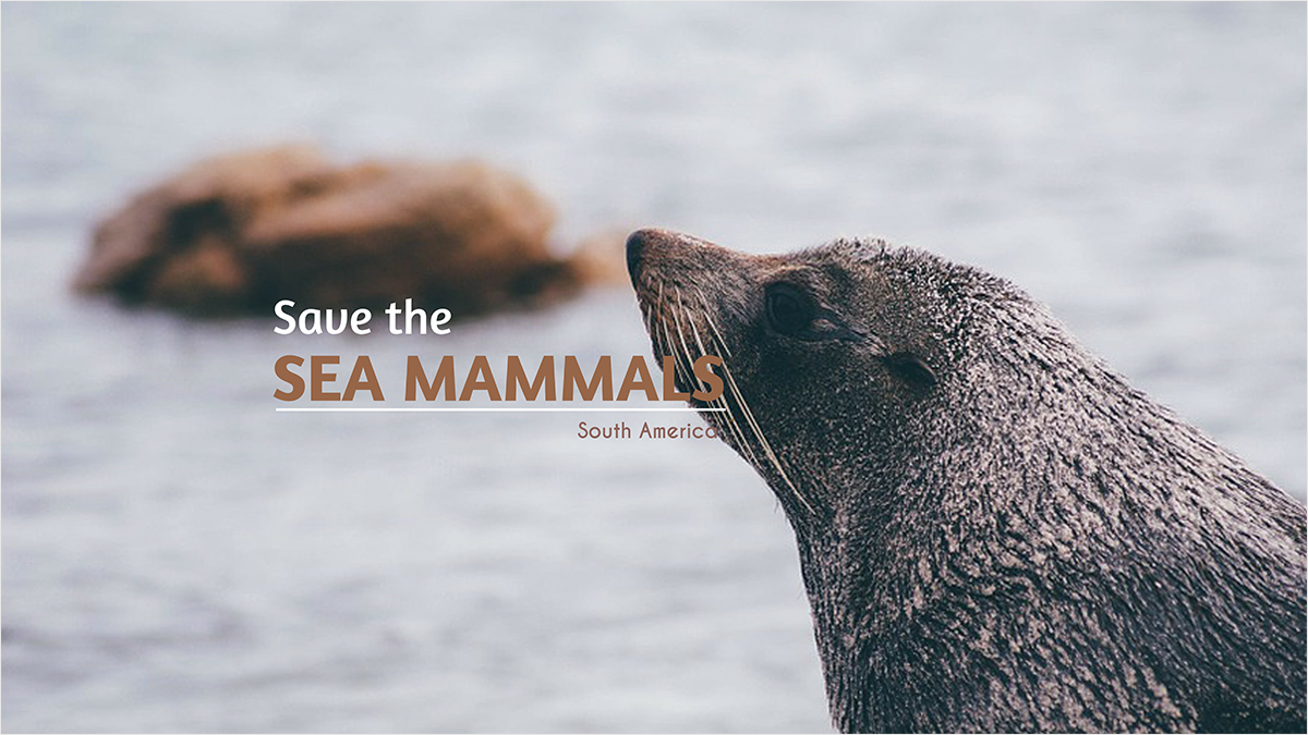 Sea-Mammals-youtube-banner-template-channel-art-sea-lion-mammals-ocean-water-lake