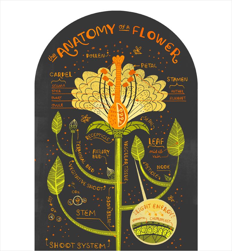 40-Infographic-Ideas-to-Jumpstart-your-Creativity-Teachers-Educators-flower-antomy