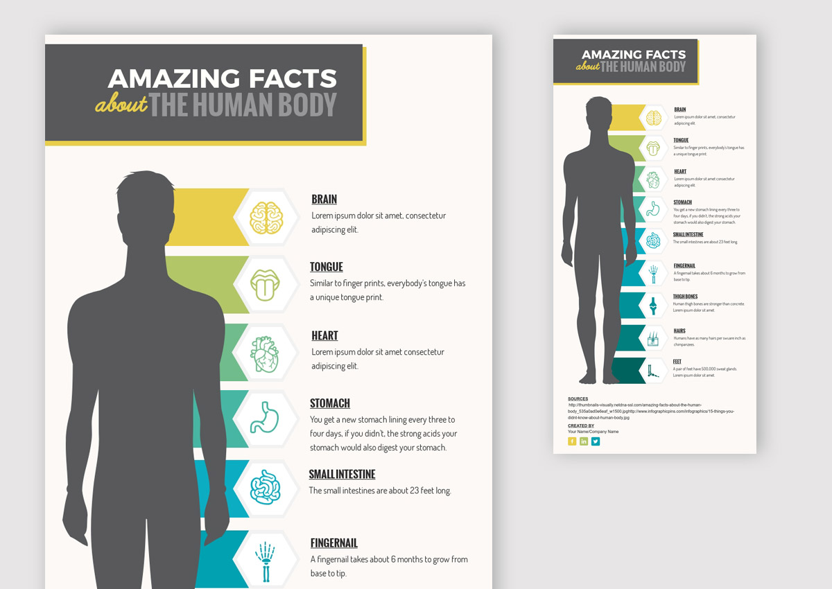 types of graphs - amazing fact anatomical diagram