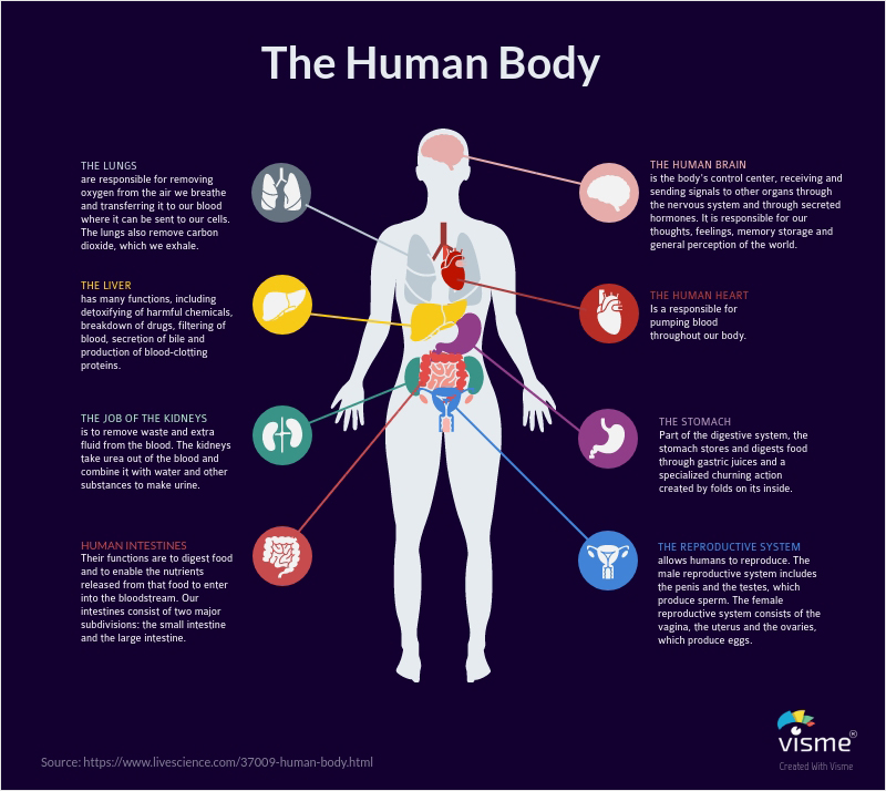 Health-and-Wellness-Anatomical-Diagrams types of graphs and charts