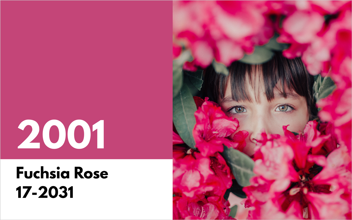 pantone color of the year 2001 fuchsia rose