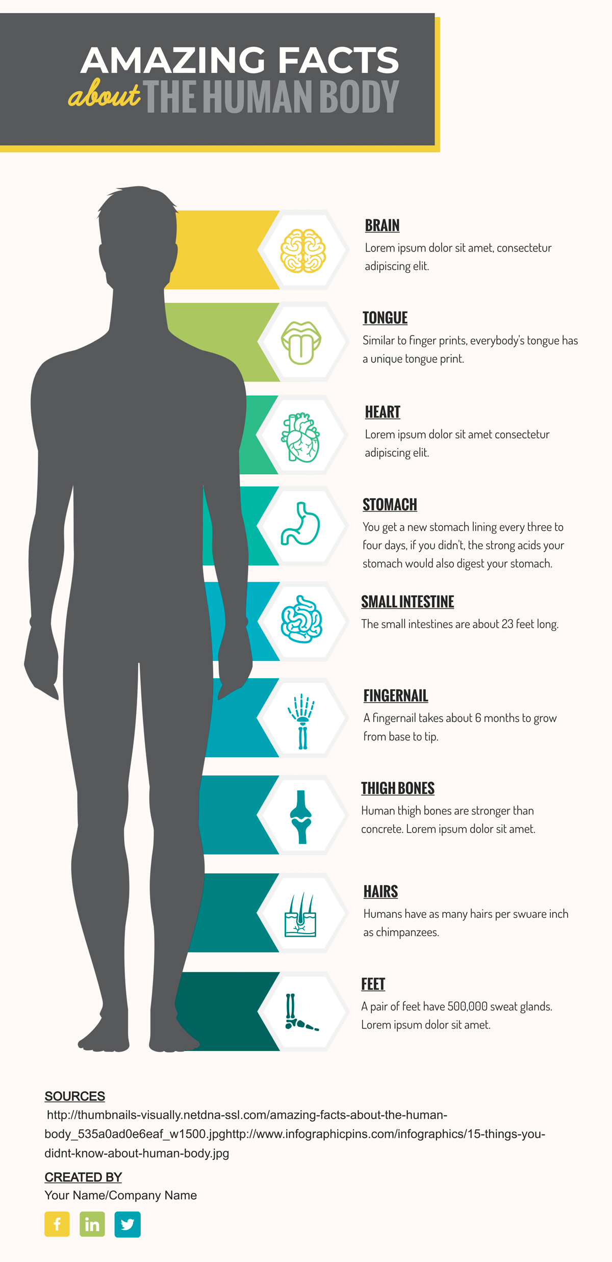 An anatomy infographic template available to edit in Visme.