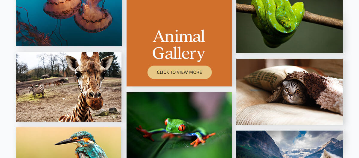 700+ presentation images - animal gallery
