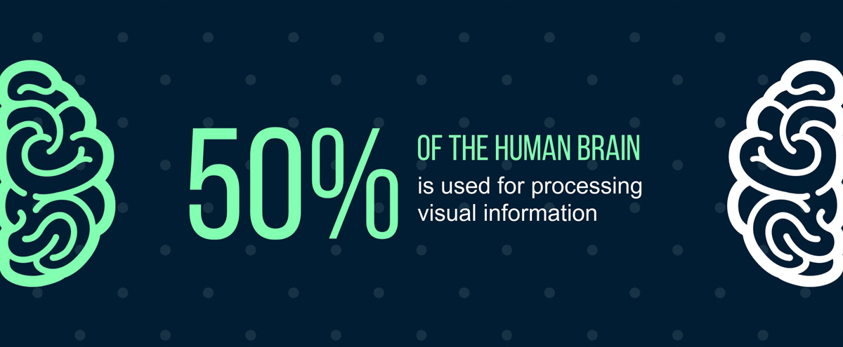 infographic statistics - 50% of the human brain