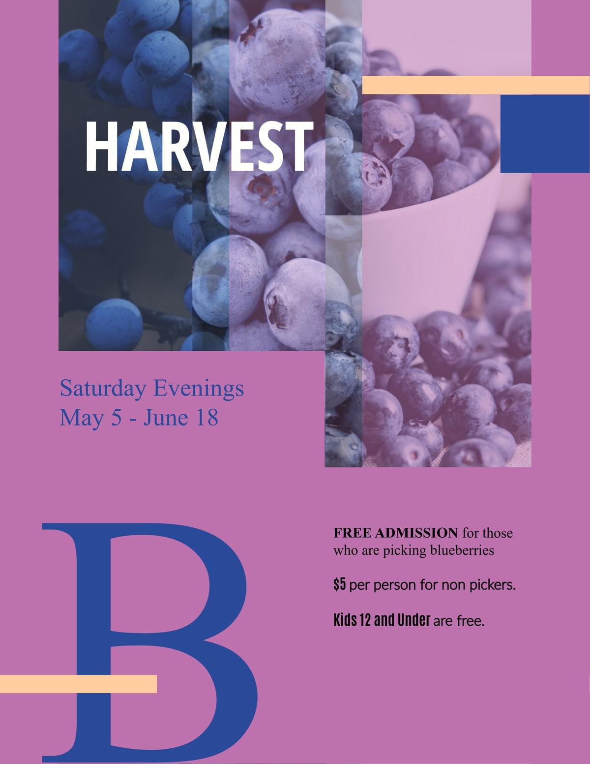 flyer templates - blueberries organic farm