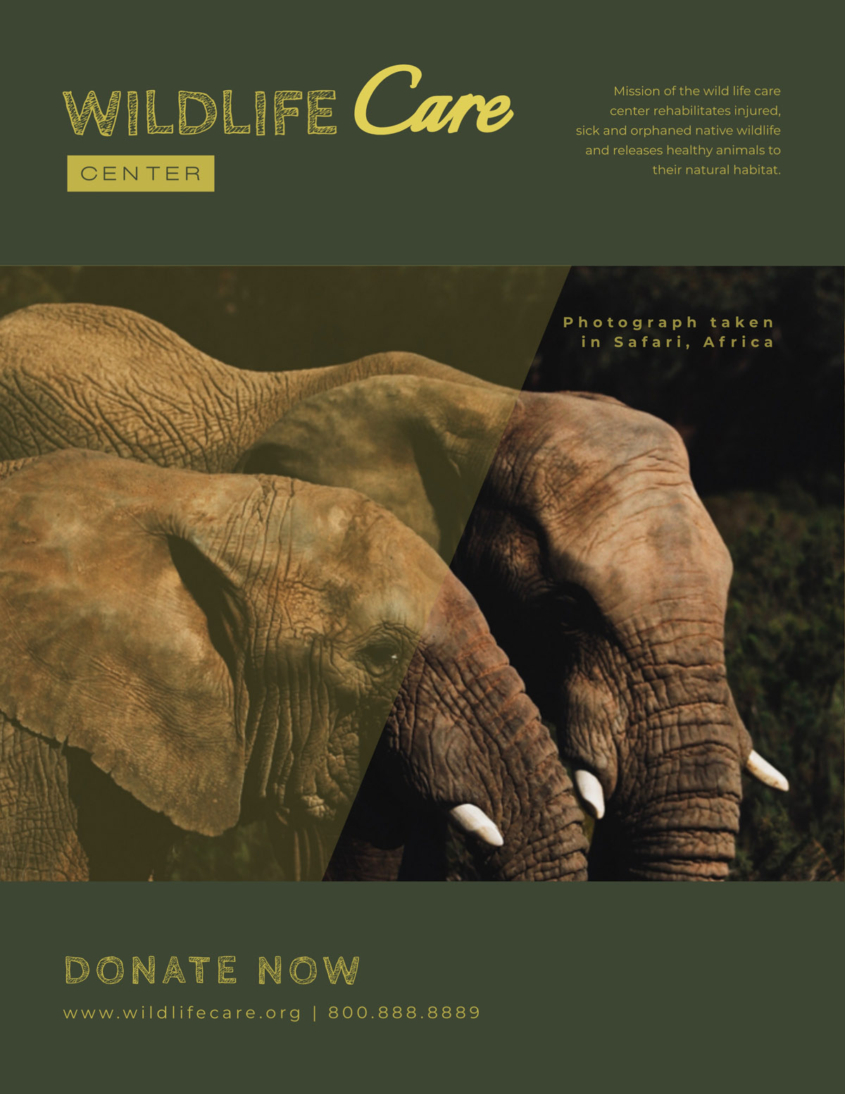 flyer templates - wildlife care