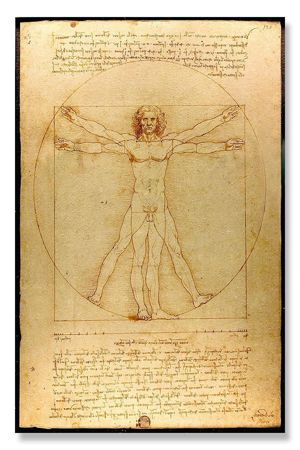 golden ratio - the vitruvian man