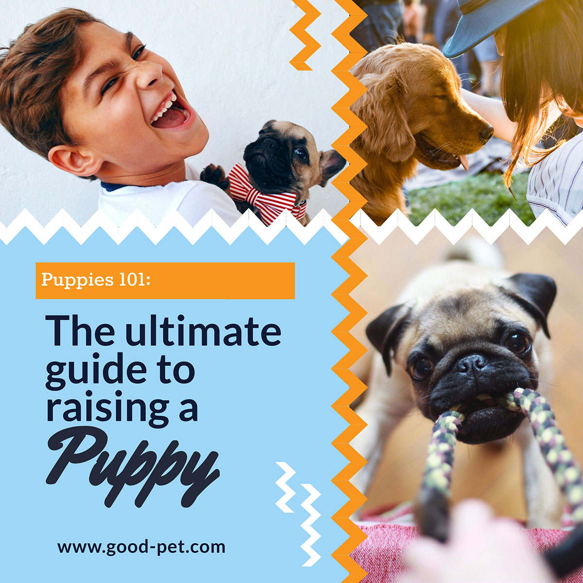 An example of social media graphic template in Visme that uses a collage of pet images.