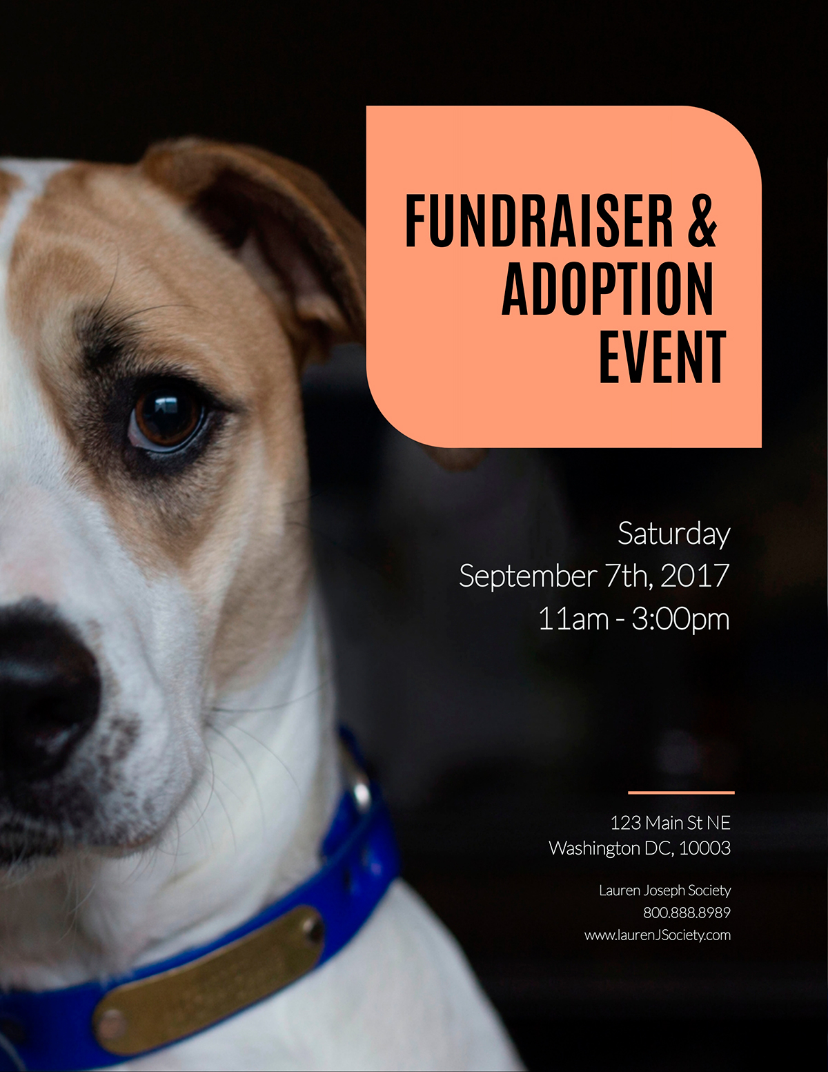 Pet adoption flyer template available in Visme.