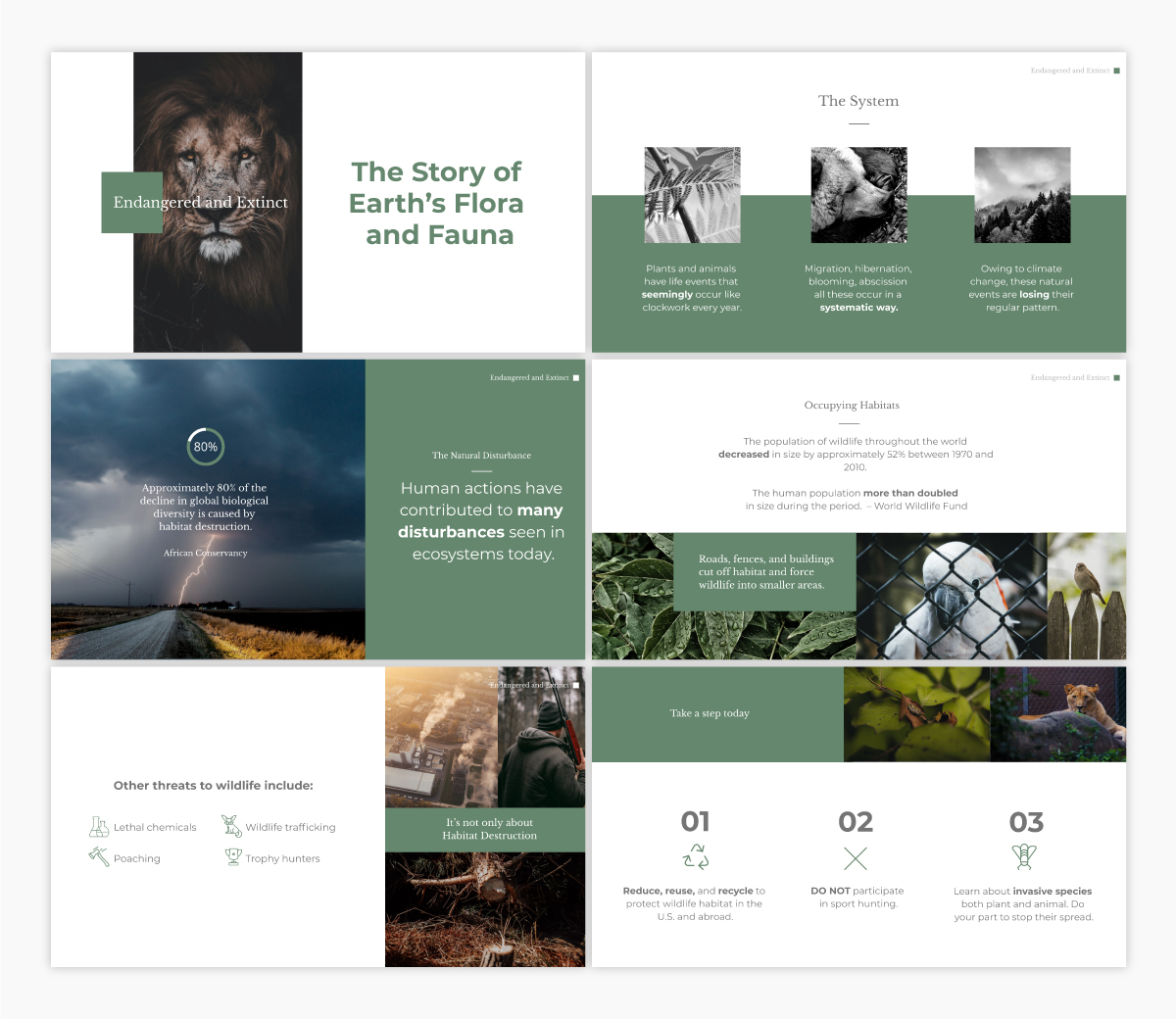 A wildlife conservation keynote template available to customize in Visme.