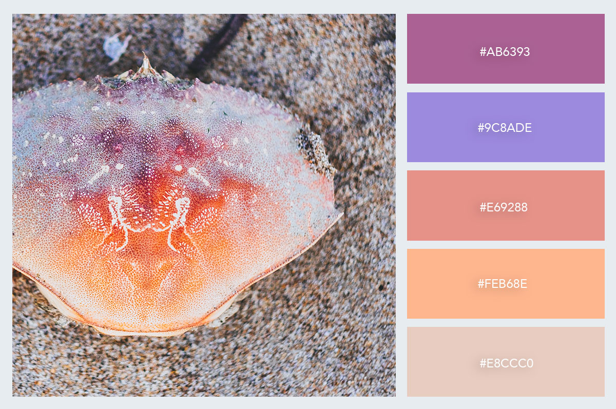 sea-shell-sand-color-palette-hex-codes-pastel-colors visme